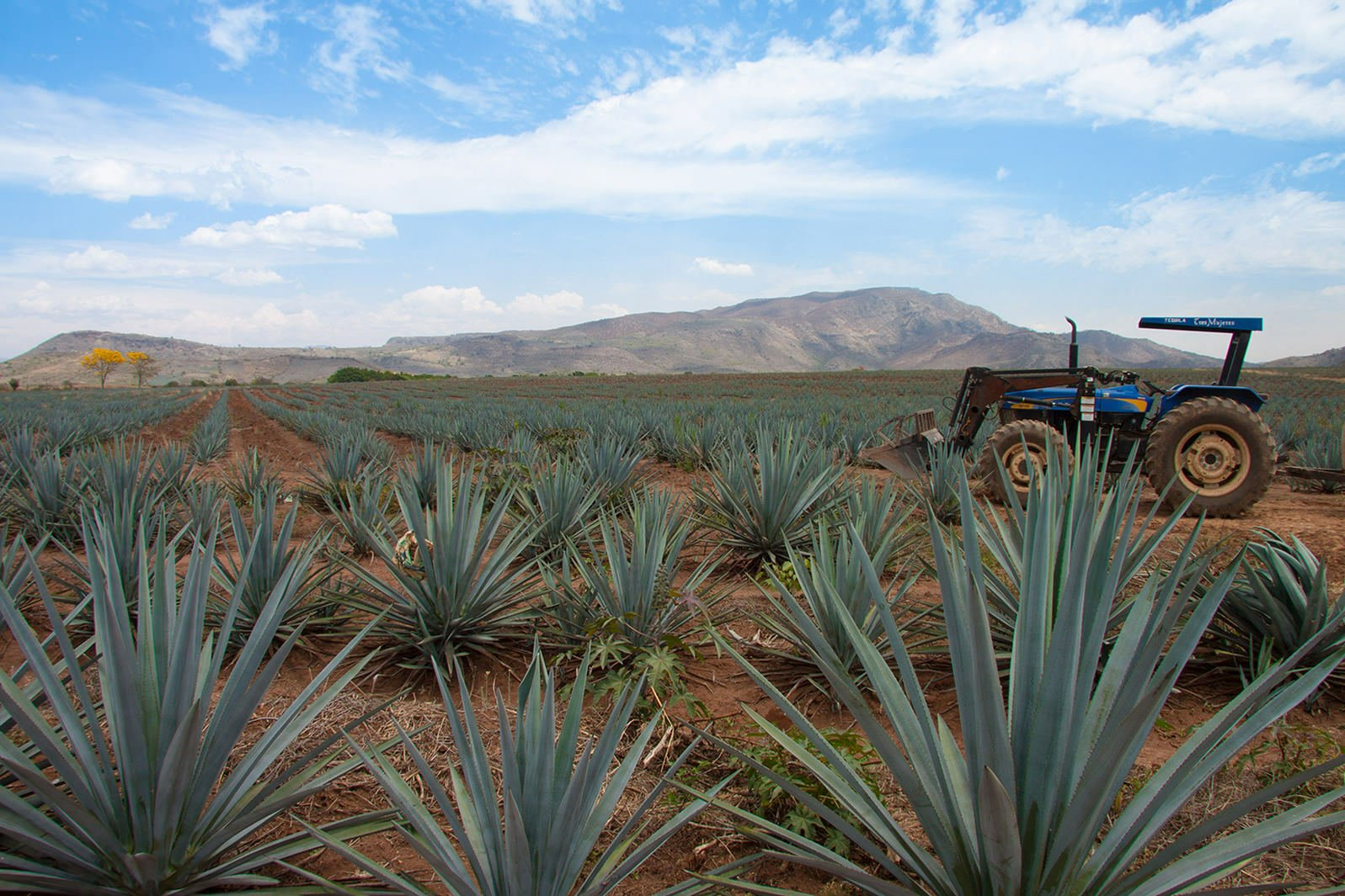 All about Padre Azul Super Premium Tequila Production. Why the most important ingredient for an outstanding tequila is time.